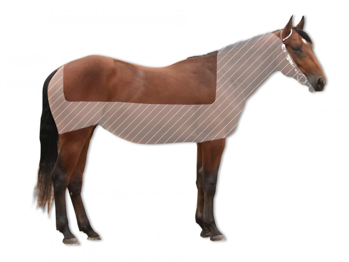 deckenschnitt - Pferd Scheren Muster
