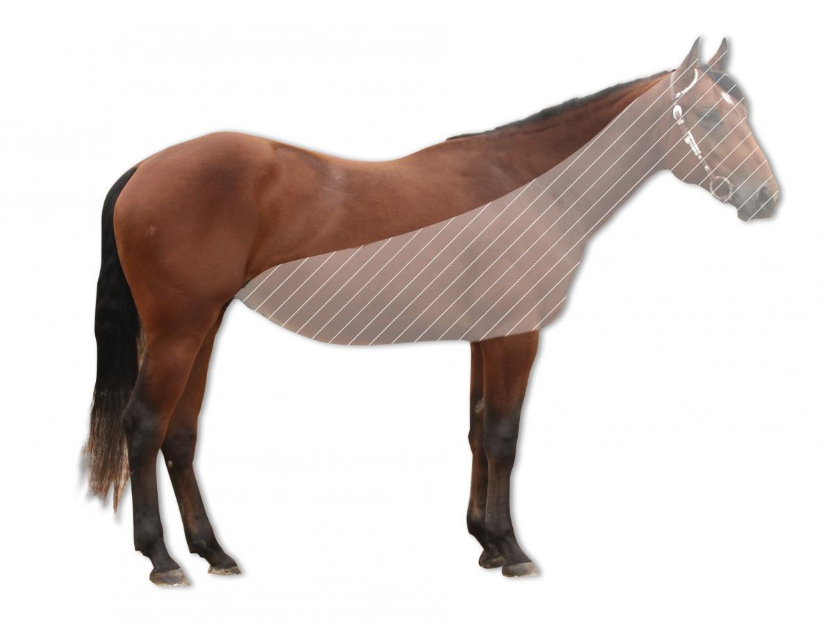 pferde ohne grenzen