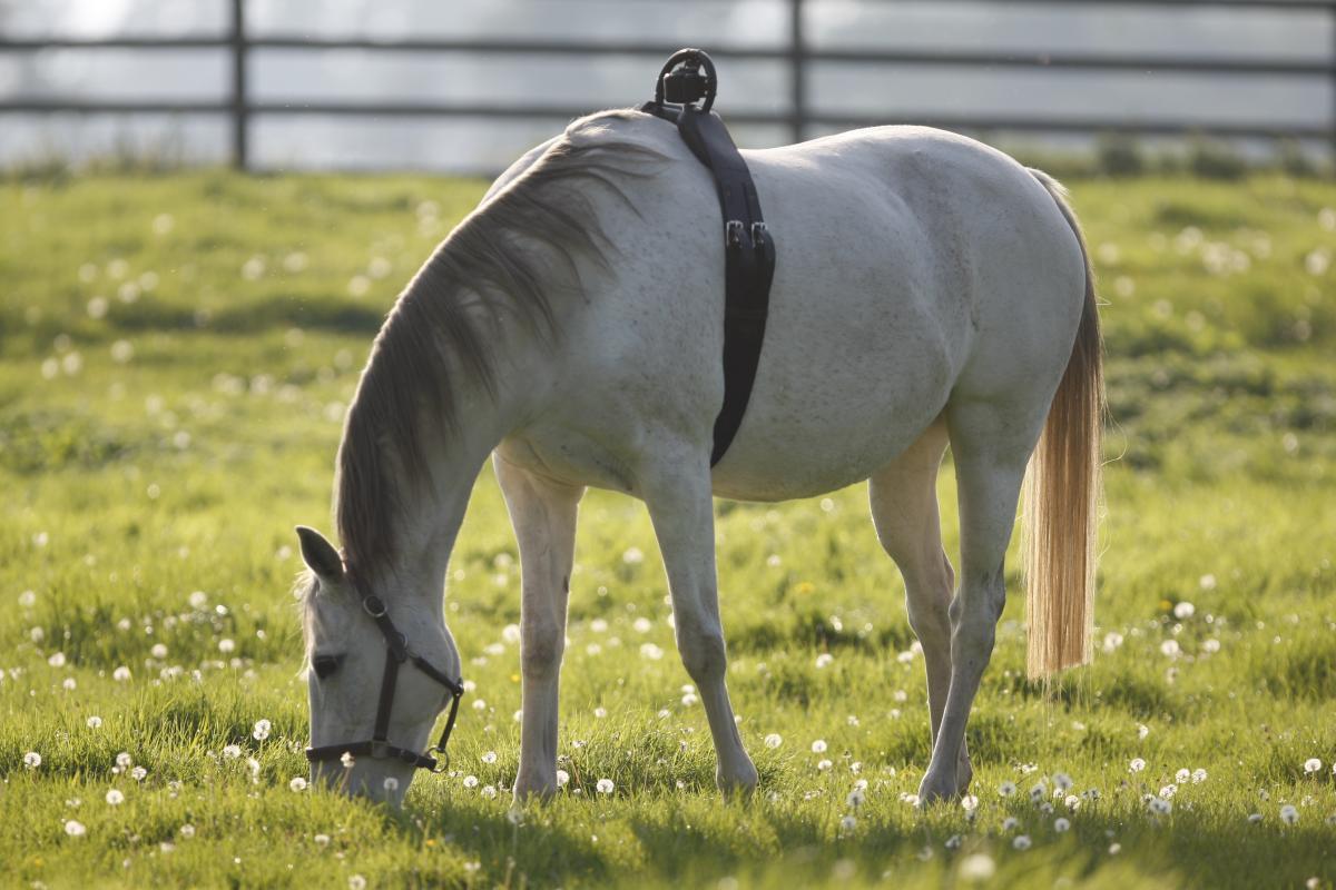Möglichkeiten Der Stuten überwachung Barnboox De Pferdewissen Online
