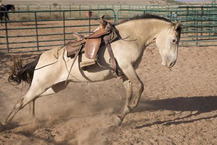 pferd unkonzentriert beim reiten