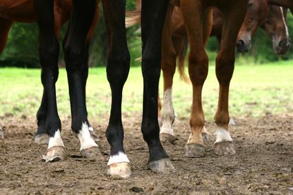 Pferdebein Krankheiten: Stellungsfehler, Arthrose, Gallen | barnboox ...
