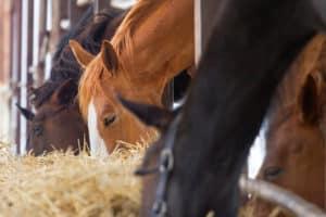 Horse eat in farm