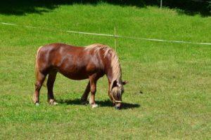 huf krankheit pferd
