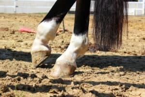 verletzung kronrand pferd