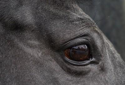 Seite 464 – barnboox de   Pferdewissen online