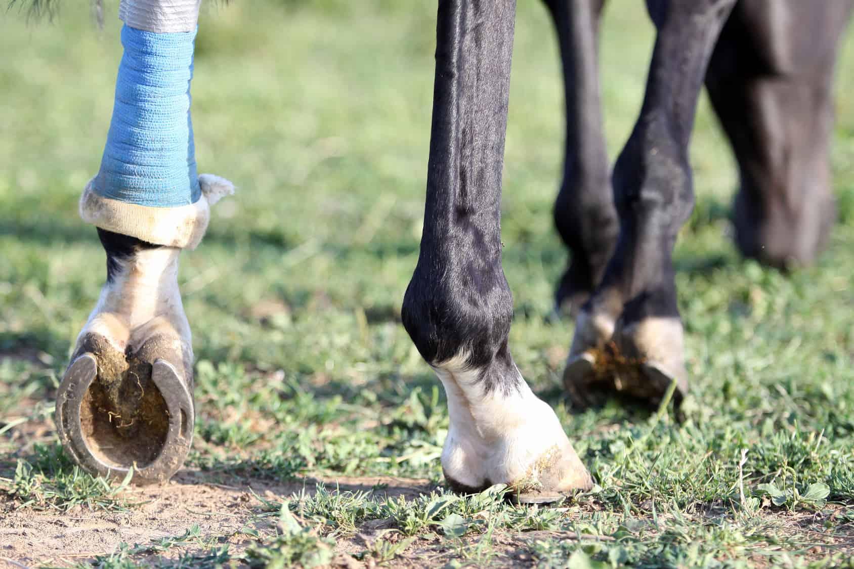 Knochenbruch – kein Todesurteil! | barnboox.de | Pferdewissen online