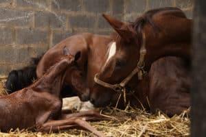 Fohlengeburt Die Grundlagen Barnboox De Pferdewissen Online