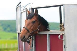 pferdeanh nger fahren 30 sicherheitstipps teil 1 pferdewissen online. Black Bedroom Furniture Sets. Home Design Ideas
