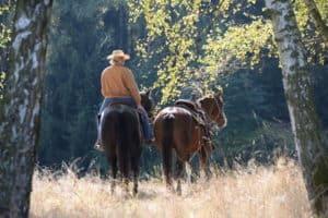 Herbstausritt, Westernreiterin mit Handpferd im Gegenlicht