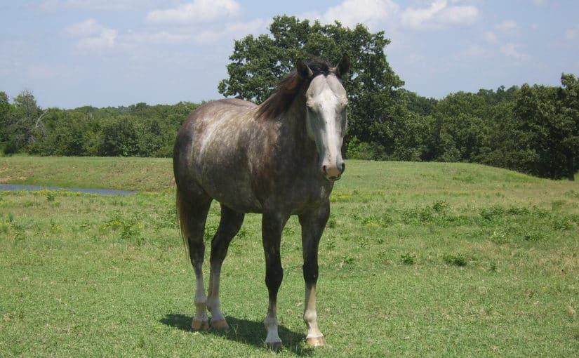 botulismus pferd silage