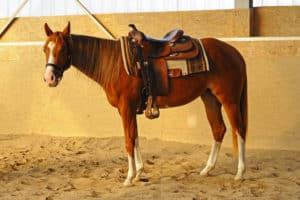 achtung ich reite pferde