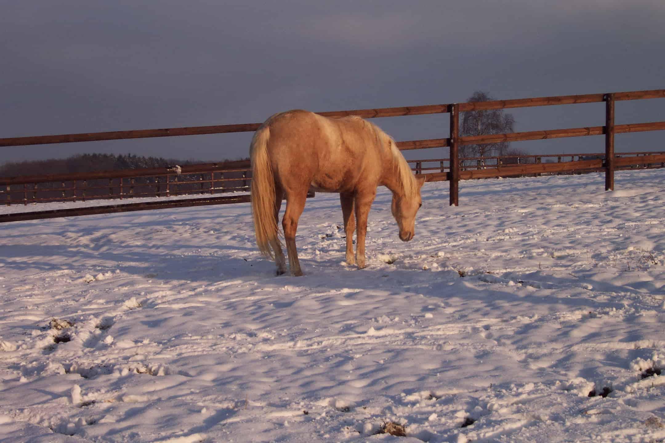 bewegungsmangel pfed winter