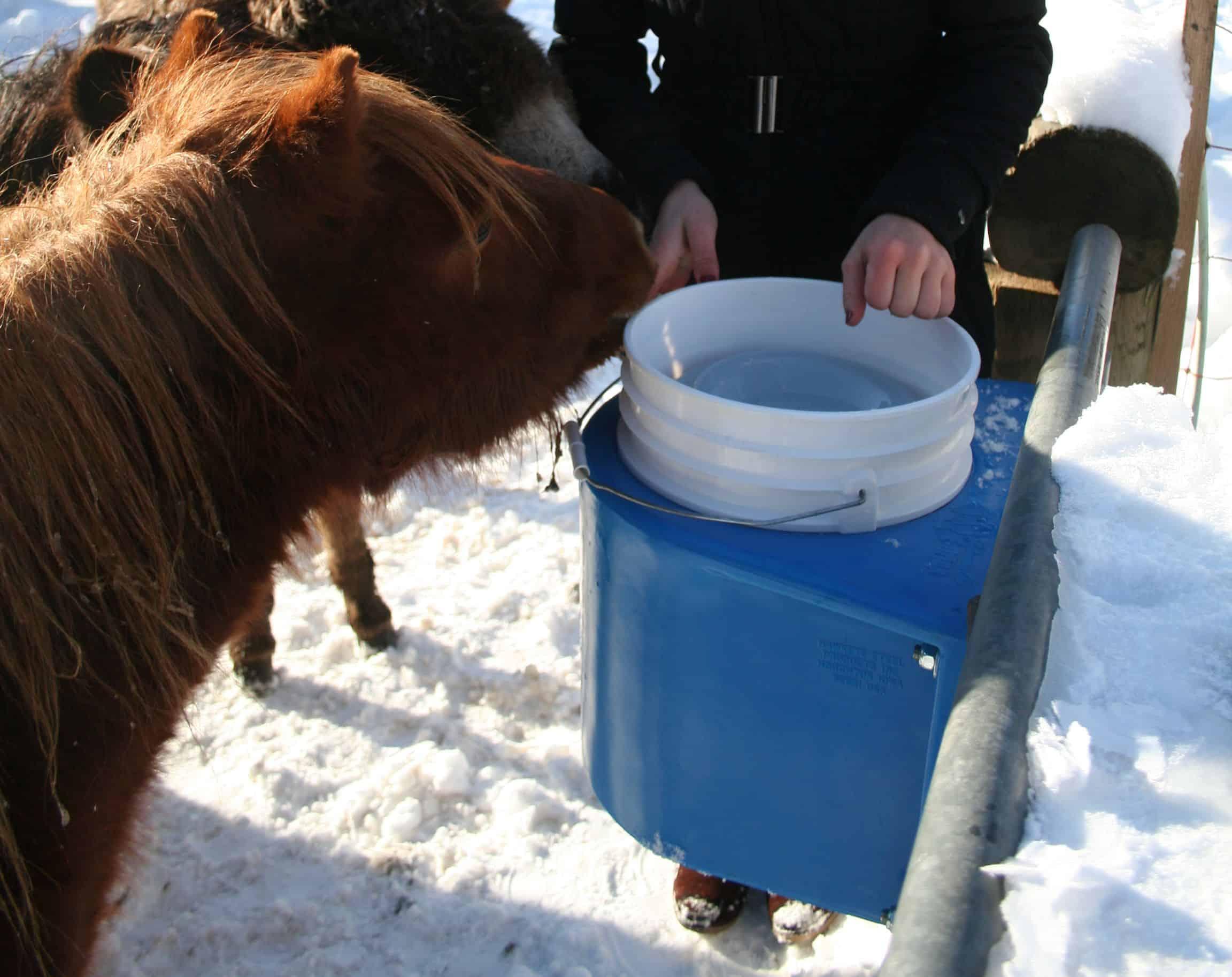 Pferdehaltung im Offenstall: frostsichere Tränken für draußen im ...