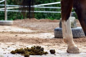 Horse with fresh droppings