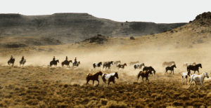 Horsedrive Idaho 2
