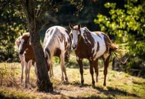 Familienidylle – Kleine Paintfamilie in ihrem kleinen Paradies