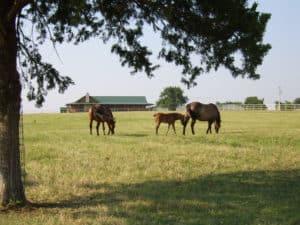 nüstern des pferdes krank