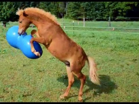 Pferde Zucht Spiele Kostenlos