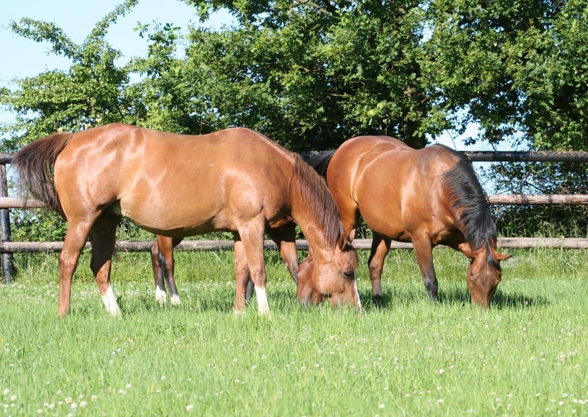 pferde richtig anweiden gefahren und tipps im umgang mit frischen gras. Black Bedroom Furniture Sets. Home Design Ideas