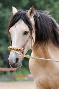 Pferd - Longe