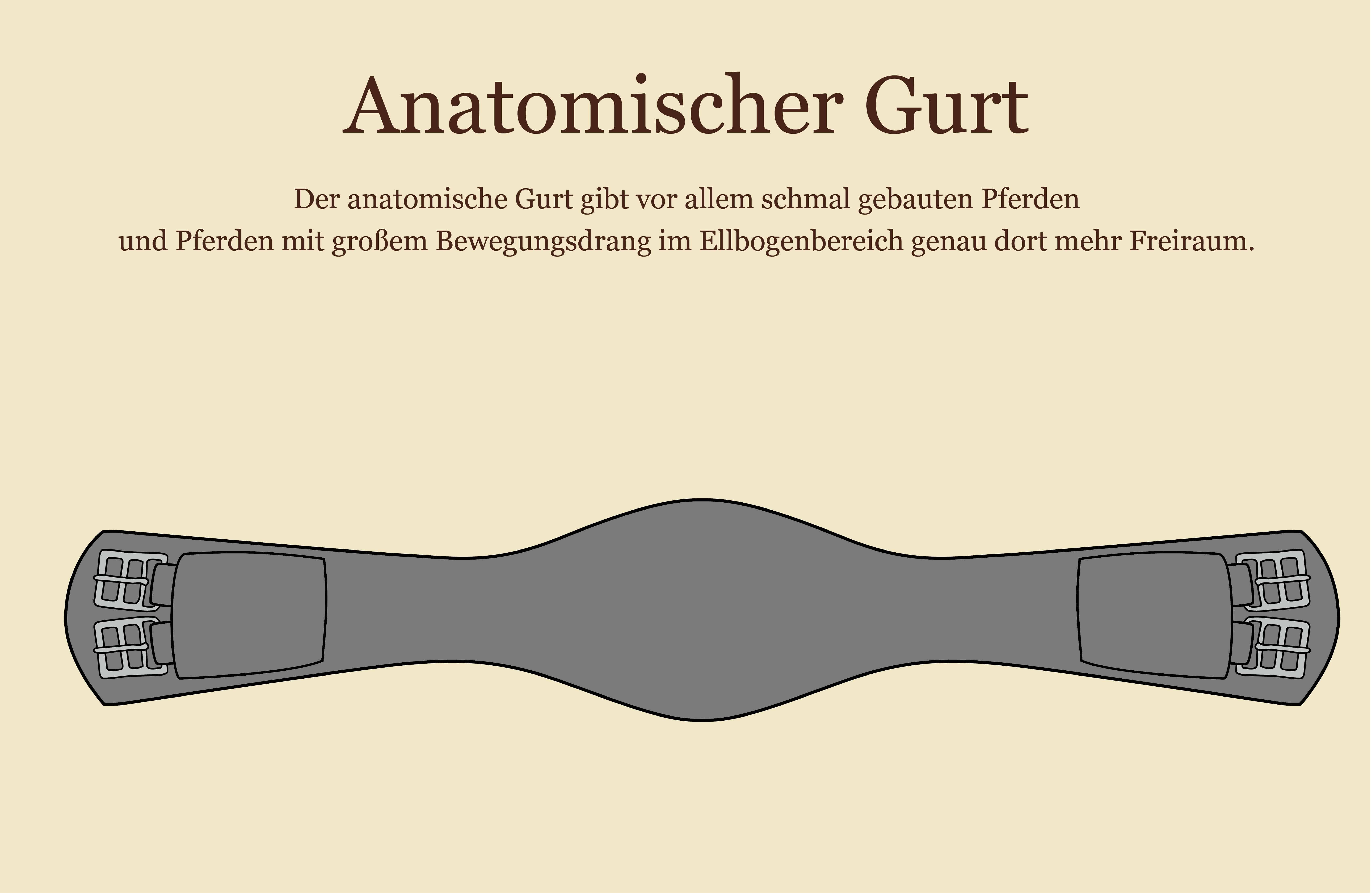 Welcher (anatomische) Sattelgurt für welches Pferd? | barnboox.de ...