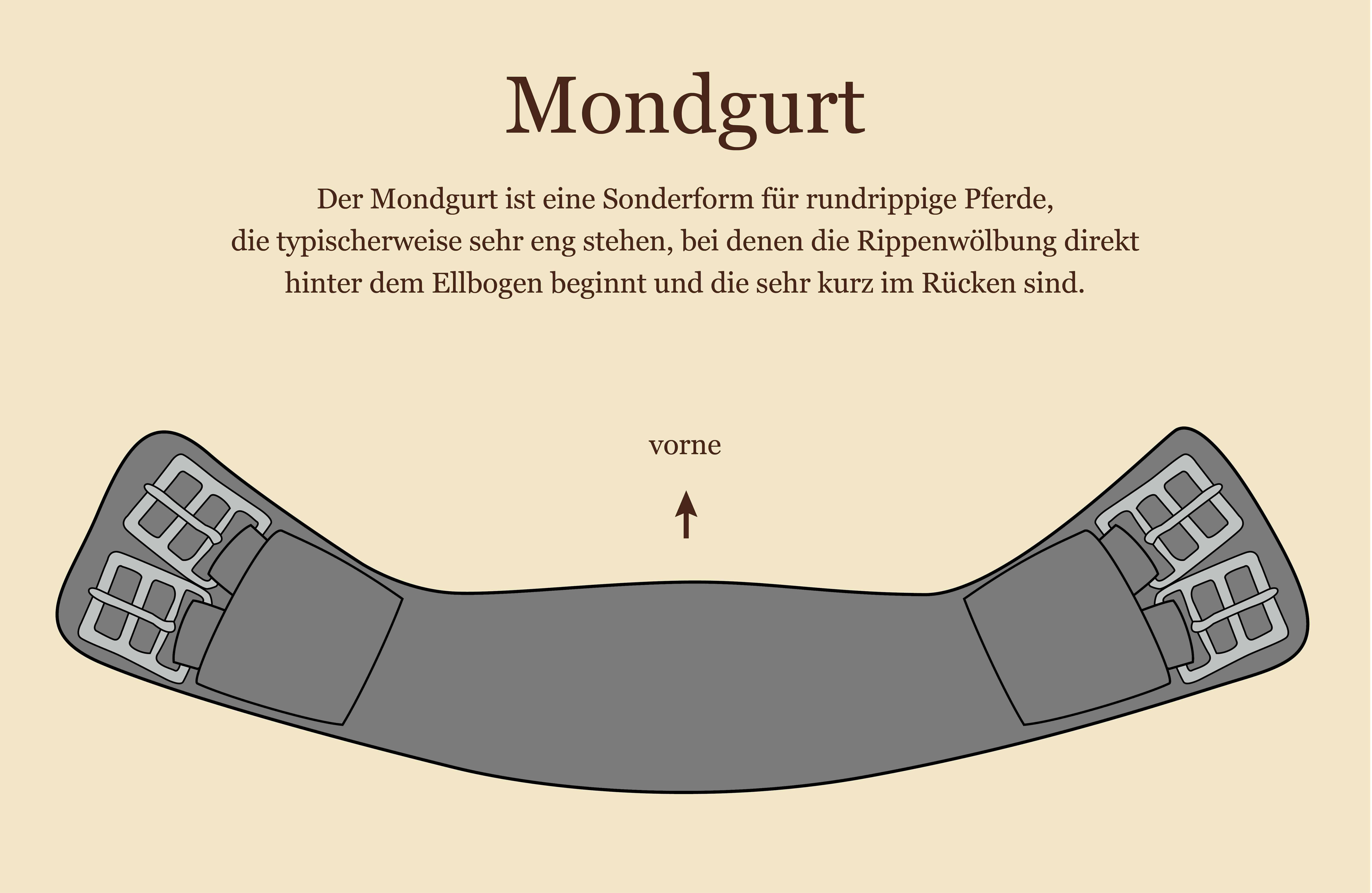 Groß Pferde Bauch Anatomie Ideen - Menschliche Anatomie Bilder ...