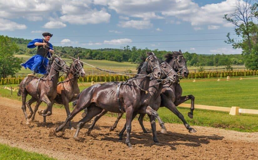 Quoten bei Pferderennen