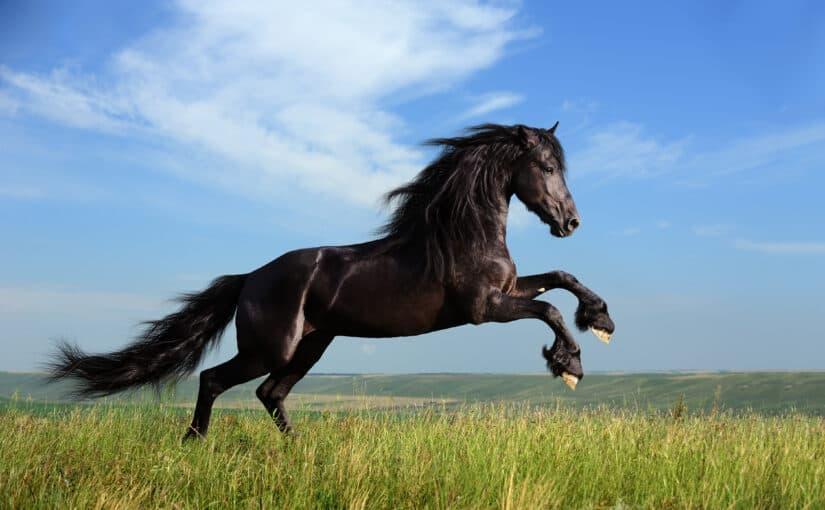 Angrasen der Pferde